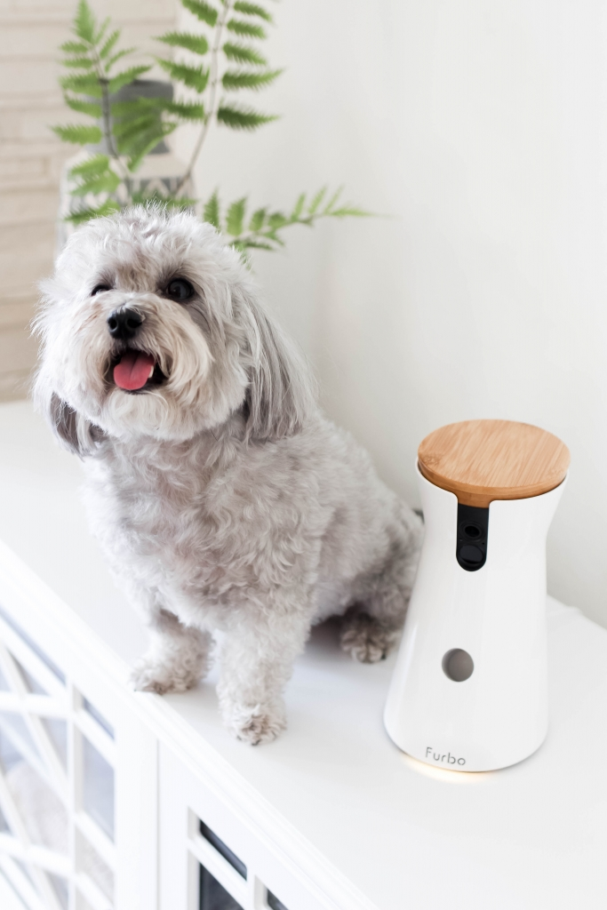 furbo dog camera amazon prime day