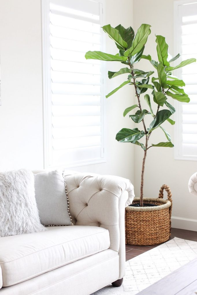 Styling and Caring For Our First Indoor Plant